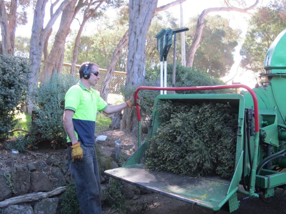 macrae horticultrue tree mulching 2