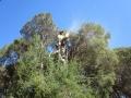 macrae horticultrue tree climbing and felling1 2
