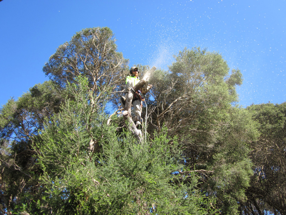 macrae horticultrue tree climbing and felling1 2