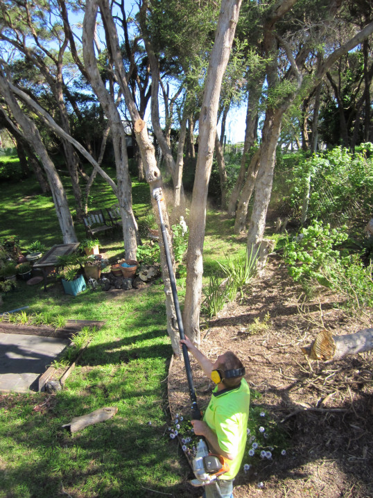 macrae horticultrue tree cutting 2