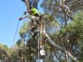 macrae horticultrue tree climbing and felling 2