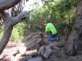 macrae horticultrue tree cutting 1